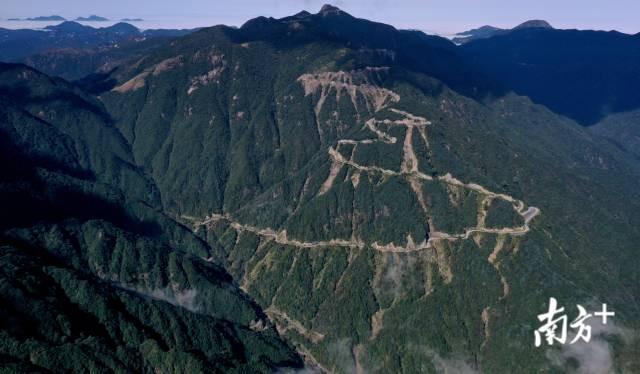 """南岭核心区内的一条水泥道路成为南岭内永痕的""""伤疤""""。南方日报记者 吴明摄"""