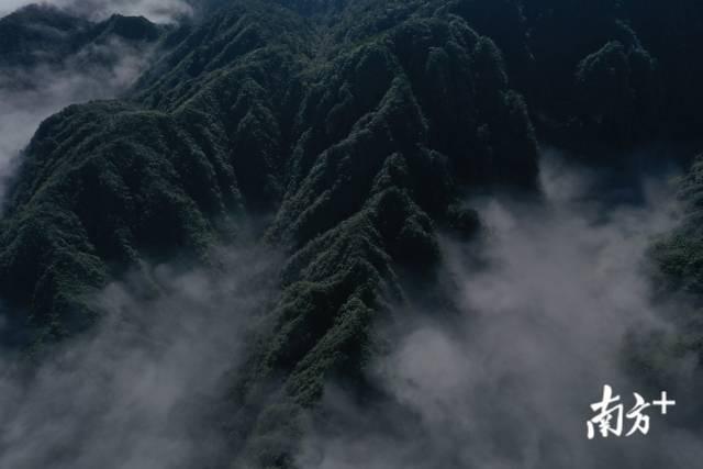 南岭作为我国华南生态宝库,内有丰富的珍贵动植物资源。南方日报记者 吴明摄